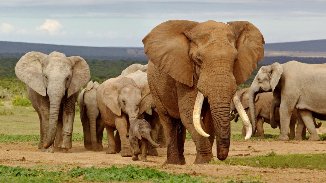 addo-elephant-national-park-south-africa